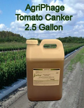 tomato-canker-2-5