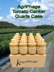 tomato-canker-quarts-case